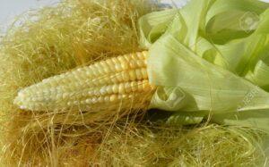 Barbas de maíz prsotatis